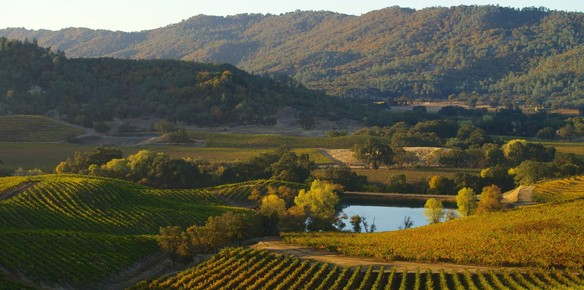 Chanel Purchases Napa Valley Vineyard